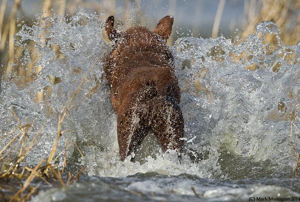 Charlie! A big splash from the Master Hunter!