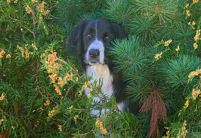 Nash in the bushes at the cottage