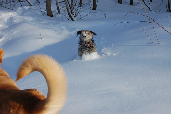 ...jumping through the deep snow.