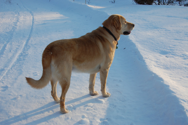 It is a beautiful day and Nelly wants to play in the snow...