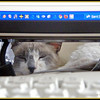 I'm watching that keyboard...except when I'm having a cat nap.