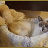 Settling in to her new bed and feeling drowsy.