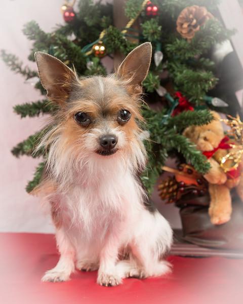 Nina Christmas