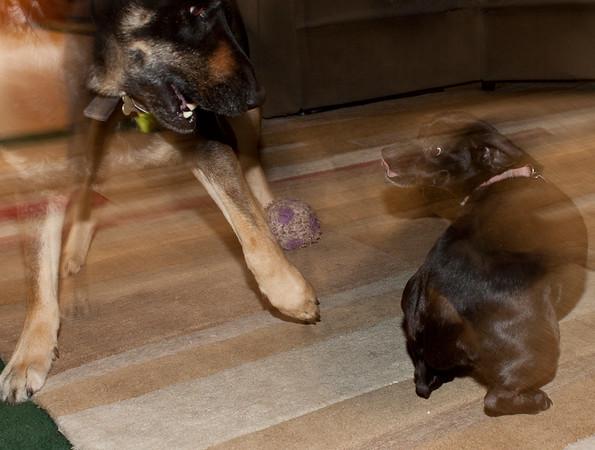 NIna and Buddy playing.