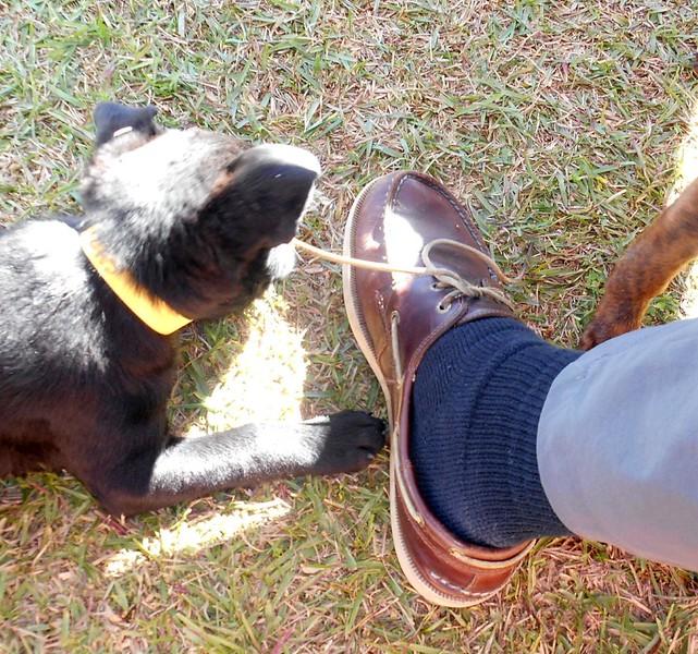 Untying my shoe... again.