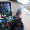 One pup checking the engine instruments.