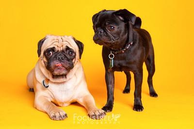 Oakley & Rosie