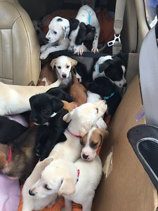 4th seat removed. Had no Helper. Just puppies!
