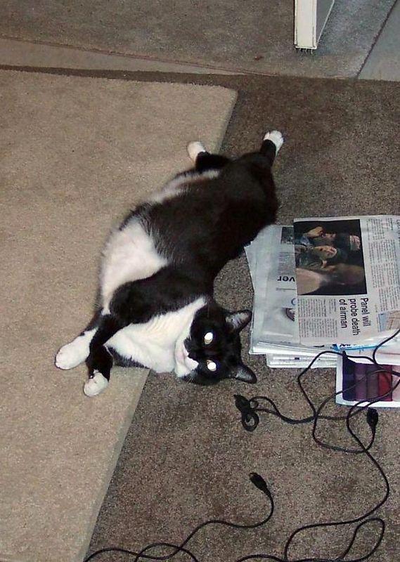 Olive having an uninhibited stretch