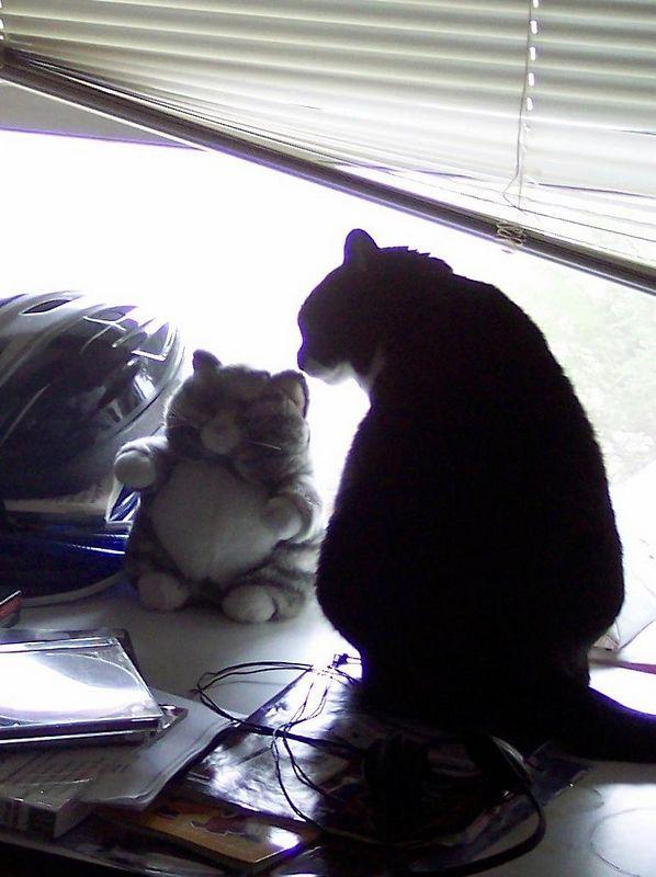 Olive kissing Pudge, the stuffed cat