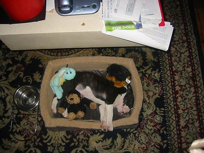 Aerial shot of Zigaboo sleeping.  He's going to outgrow this bed really quickly.