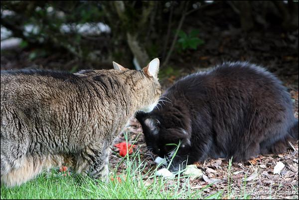 Kitties0512(web)_0003