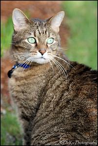 Kitties0508(orig)_0004