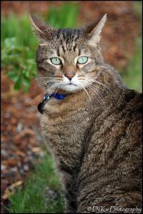 Kitties0508(orig)_0006