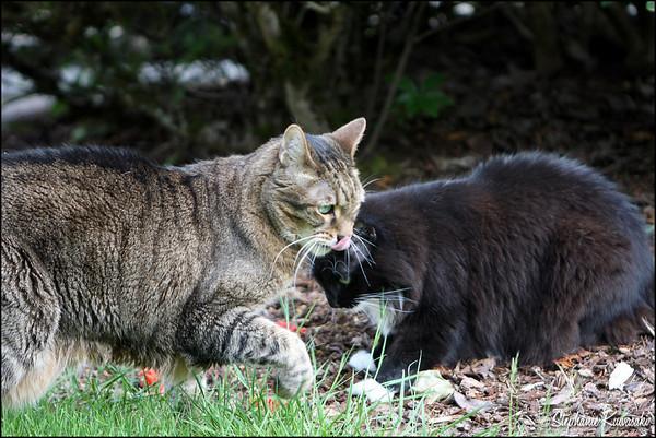Kitties0512(web)_0005