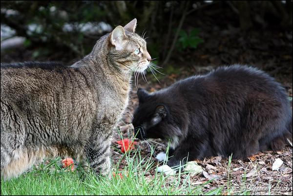 Kitties0512(web)_0004