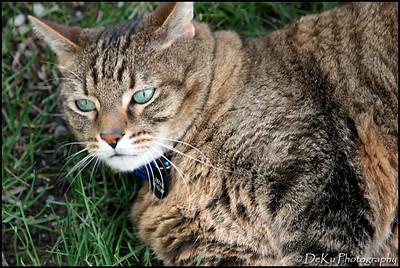 Kitties0508(orig)_0008