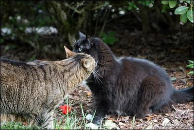 Kitties0512(web)_0002