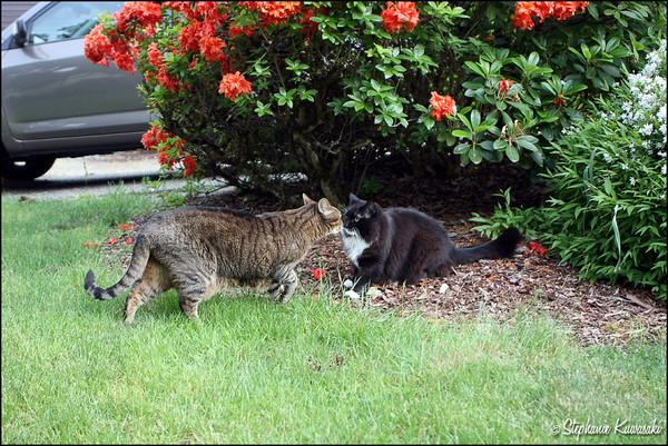 Kitties0512(web)_0001