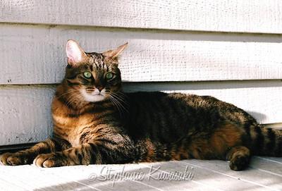 April 2004 Oscar