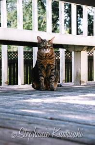 April 2004 Oscar2