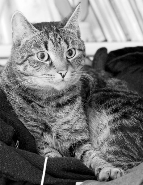 Doesn't he look like the inquisitive little tomcat he loves to play sometimes?