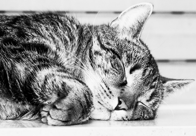 I am a harmless tomcat, lying here on the warm window sill.