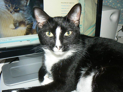 Jet on the Computer