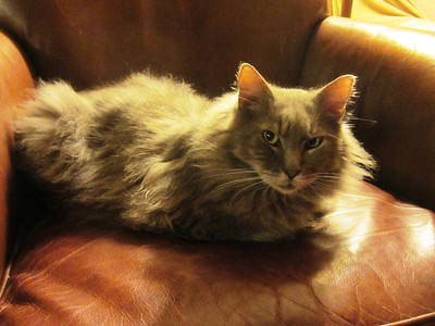 Fluff on the chair