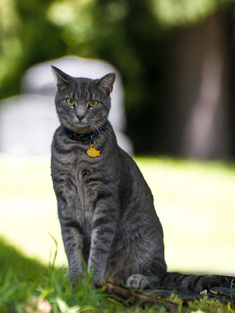 A Neighborhood Cat