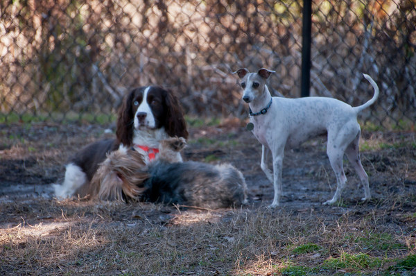 Hope and her friends Jake and Giovanni at the dogpark