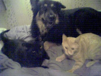 Raven, Margo, and Stickybun, January 2004
