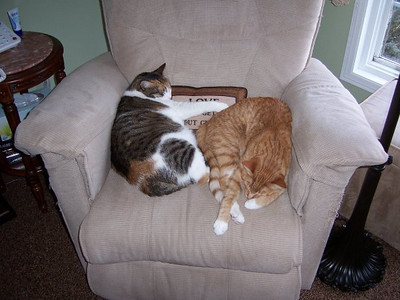 Abby & Max sharing a nap and a chair  :)