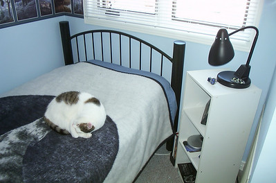 Lucky curled up napping on Al's bed - condo on Coulter St - 2002