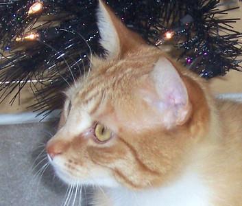 Max - age 4 yrs - Dec 2010