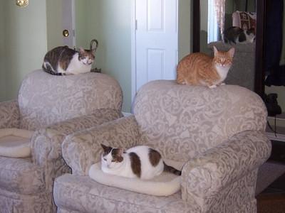 Abby, Max & Lucky - 14 Palling Lane - 2009