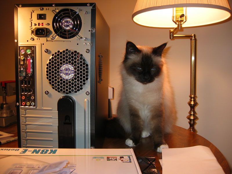 Zephyr posing next to one of the new computers he helped me build.<br /> He would get inside of it when I wasn't looking.