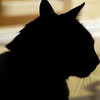 Jasper in silhouette
