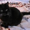 Squeek aka Kitty Girl - Dec. 2011