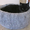 Squeek, aka Kitty Girl, In Her Snuggle Basket --- Finally<br /> We purchased this in February and put her in it but she wasn't fond of it.  Seemed to be uncomfortable with it since it didn't have a solid base to remain stable.  She loves to lay on brown shipping paper when we get a Nature's Sunshine order, so I decided to put some of it in the snuggle basket and a day later she climbed in.  She looks really happy with it now, only 9 months later.