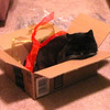 Squeek Loves Christmas Trimmings - 12/25/13<br /> Our little box kitty.