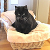 Squeek, aka Kitty Girl, in Dining Room Basket