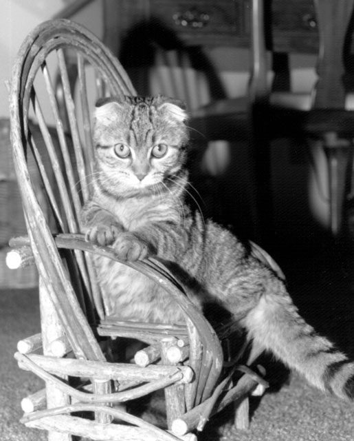 An old black and white photograph of Holly when she was younger.<br /> She is posing in a miniature bent willow chair for Becky.