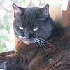 Squeek, aka Kitty Girl, on 15th Birthday