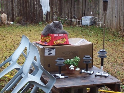 Kitten enjoys the soggy view from his cardboard box tower in the back yard.
