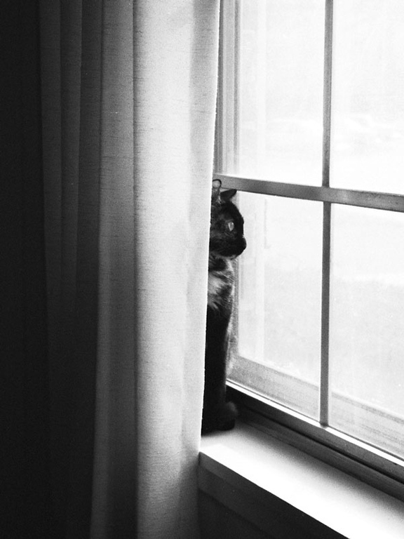 A photograph of our tortoise shell cat, April...<br /> sitting on the window sill in our small apartment on a cold snowy day.<br /> Scanned from a 35mm negative. Becky took this in December 1988.
