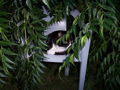 """Hank thinks he's """"King of the Jungle"""" under some freshly trimmed tree branches."""