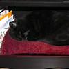 Kitty Girl (Squeek) in Bottom Shelf of Donna's Desk - Dec. 2012
