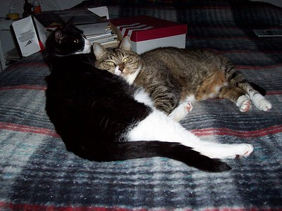 Hank & Vespa. Vespa thinks Hank is the best pillow in the house.
