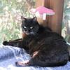 Precious Squeek, aka Kitty Girl, on Her 15th Birthday